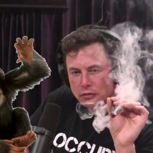 Elon Musk ja apina